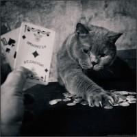 casino poker online red riding hood online