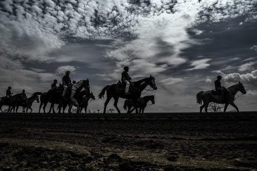 paardenraces